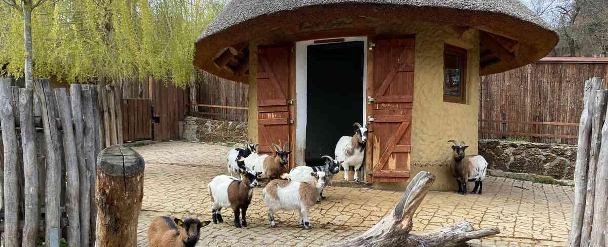 Ziegengehege im Tiergarten