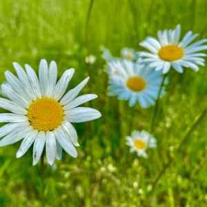 Symbolbild Blume